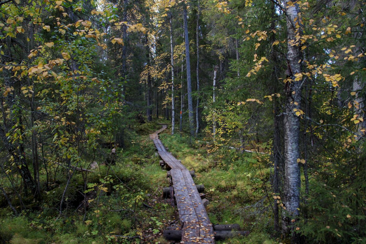 Pitkospuut Sinettäjärven läheisyydessä
