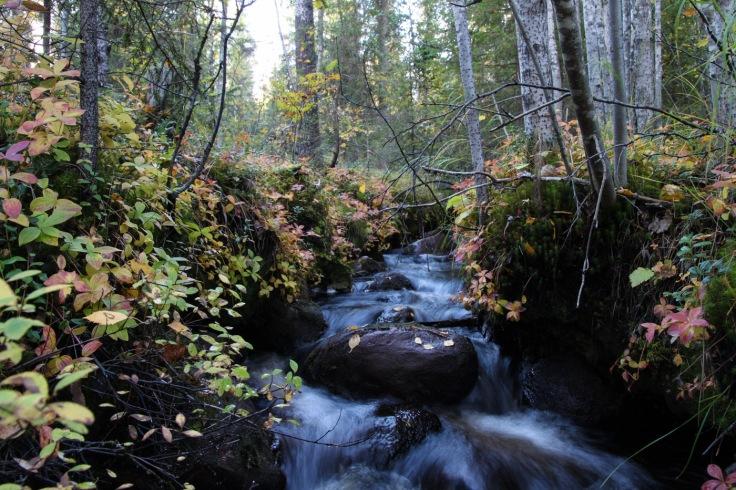 Pieni puro ja ruskaa Sinettäjärven lähettyvillä