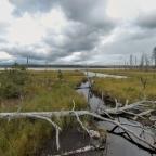 Elimyssalossa vanhat metsät ja kelopuiset suot häikäisevät kauneudellaan