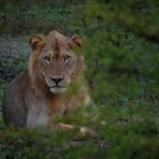 Edullinen safari Tansaniassa – Selousin riistansuojelualue